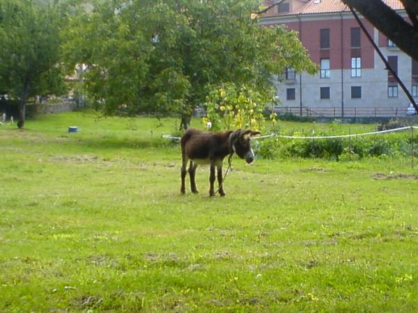 Ein Esel, den ich fotografieren musste, kurz vor Pineres.