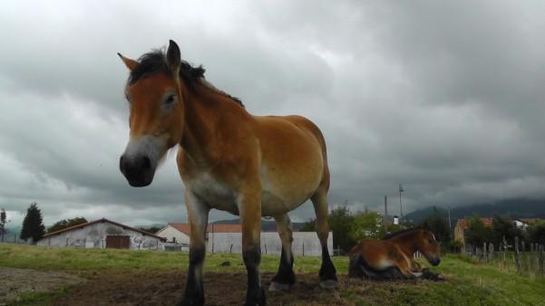 Pferd bei Deba.