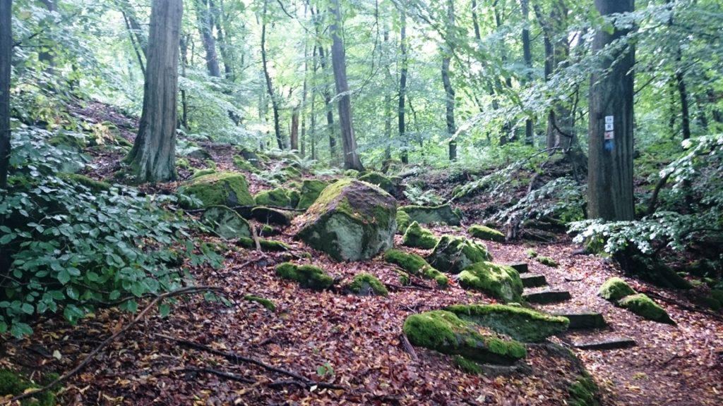 Viel Wald und Grün.