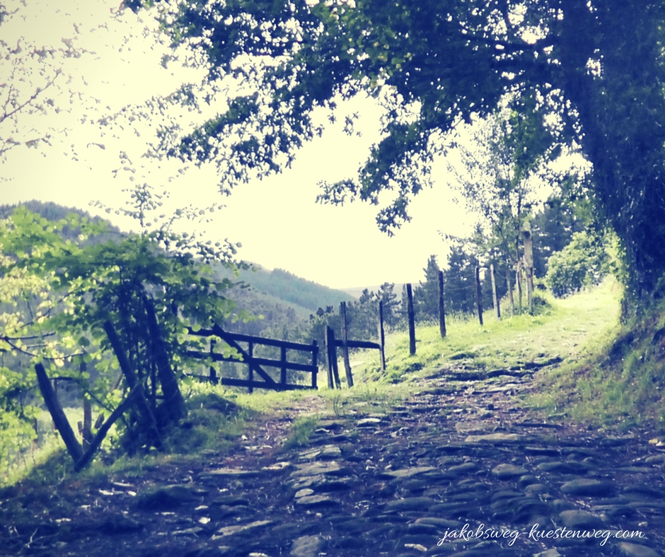 Natur auf dem Camino Santiago