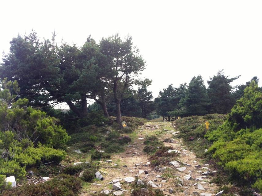 Camino Primitivo ein herausfordernder Weg