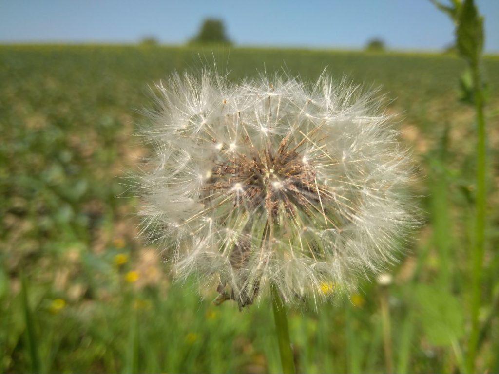 Blume auf einem Feld