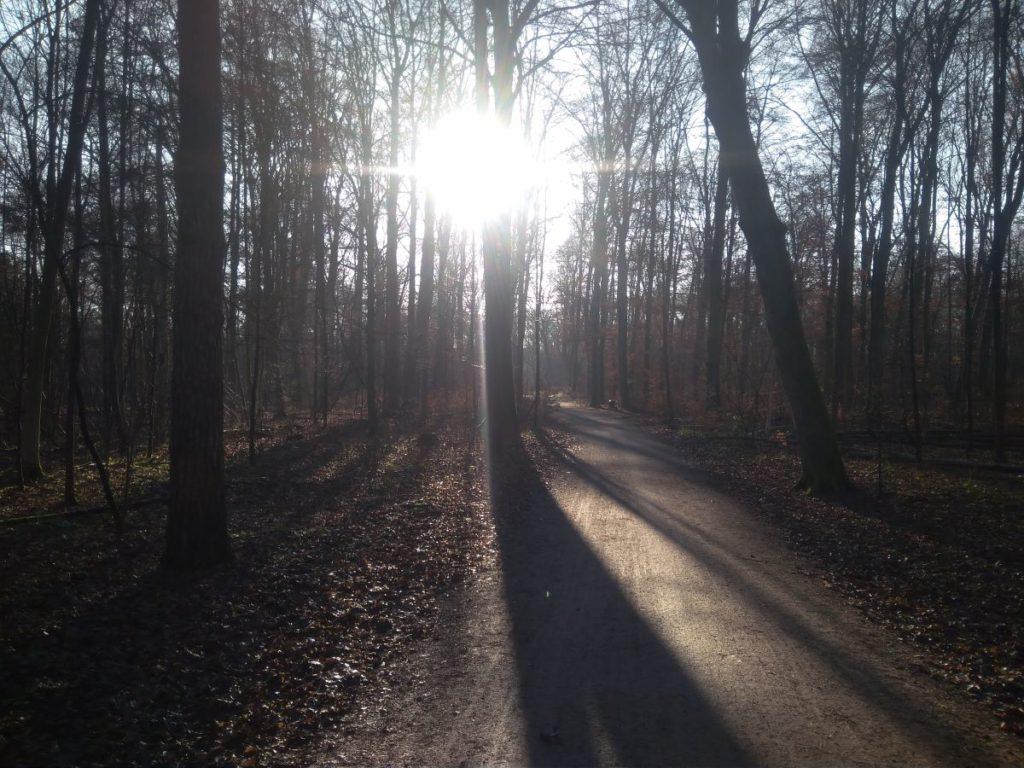 Waldweg in meiner Heimat