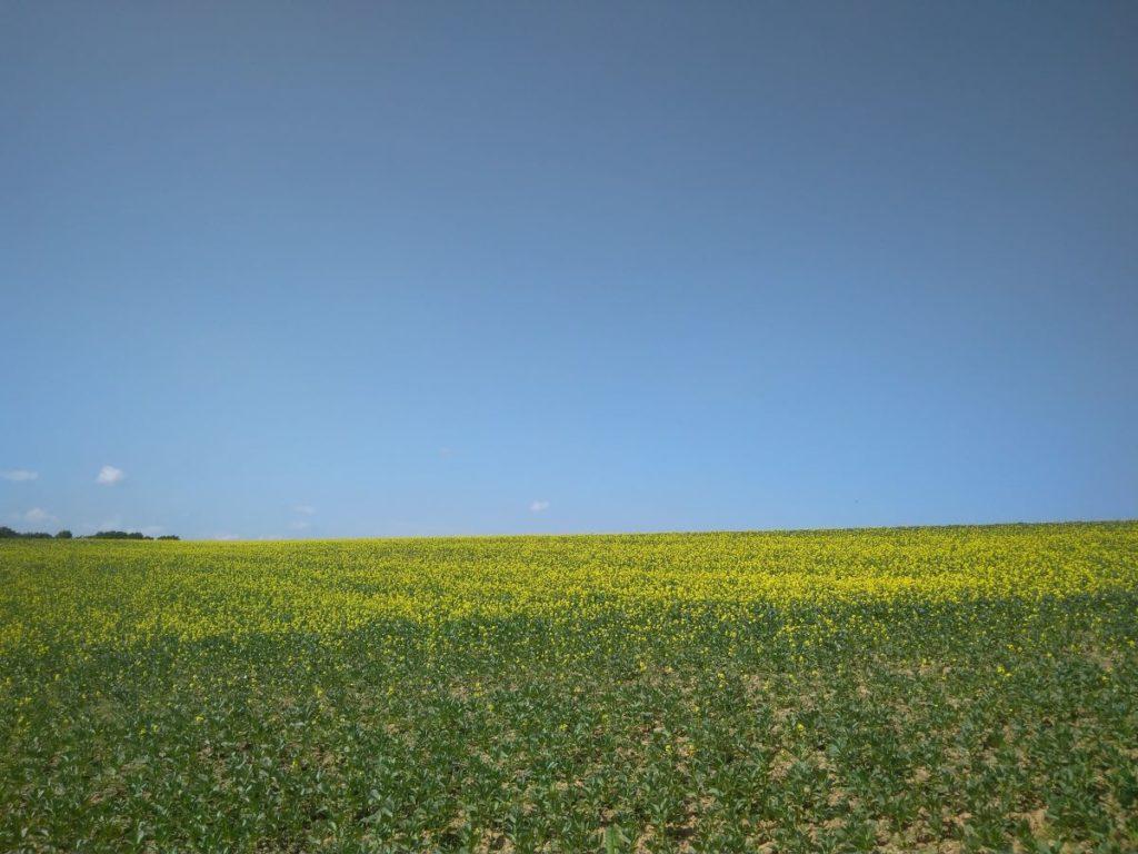 Buntes Feld im Frühjahr zur Pollensaison